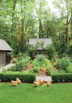 It even has a Southern Living chicken coop - Dream garden! It even has a Southern Living chicken coop coop -Dream garden! It even has a Southern Living chicken coop - Dream garden! It even has a Southern Living chi. Garden Care, Big Garden, Dream Garden, Garden Pond, Shade Garden, House With Garden, Hillside Garden, Garden Houses, Garden Kids