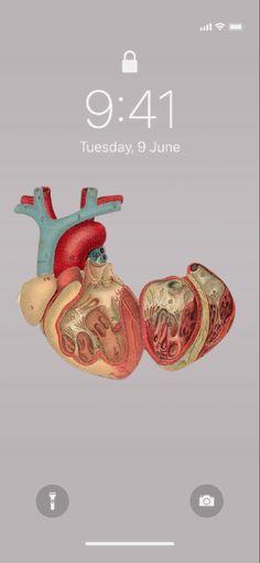7 Vintage Medical Anatomy Wallpaper Idea iPhone Aesthetic