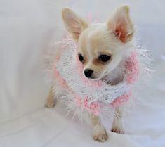 XS  White with pink Eyelash Trim Dog Hoody Sweater by RocknHotdog, $16.00