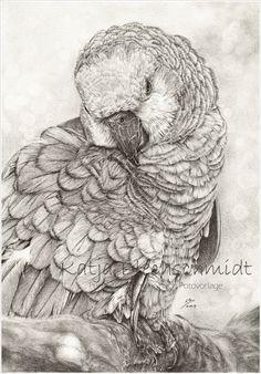 Vogelportrait - A4 https://www.facebook.com/Portraits.und.mehr.nach.Fotovorlage