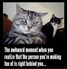 haha! mischevious cats!