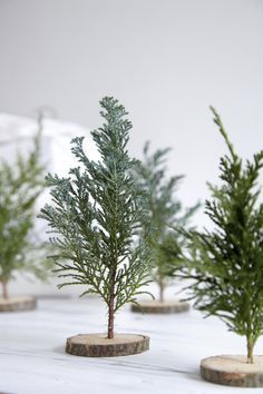 DIY mini christmas trees with little wood slices and greenery twigs.