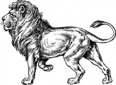 How to draw a lion step by step
