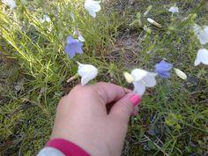 #kissankello #valkoinenkissankello #kukkia