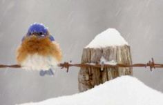 Bluebird on a wire . . .
