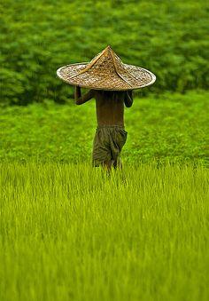 Beautiful Bangladesh: Have you seen such lush green? Walking through green fields of Bangladesh. We Are The World, People Around The World, Around The Worlds, Laos, Beautiful World, Beautiful Places, Bangladesh Travel, Dhaka Bangladesh, Vietnam