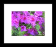 Azaleas Framed Print by Janis Kirstein.  All framed prints are professionally printed, framed, assembled, and shipped within 3 - 4 business days and delivered ready-to-hang on your wall. Choose from multiple print sizes and hundreds of frame and mat options.