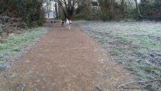 Running Dogs - Balham Dog Walker www.harrisons-dogs.co.uk