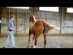 Teach a Horse to Side Pass on the Ground - Part 2 - YouTube