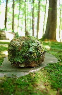 Growing a moss garden: Facts, Tips, and Tricks.