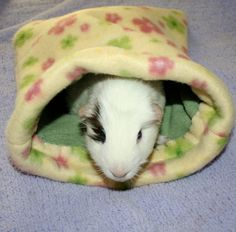 Piggy Pouch fleece guinea pig bed/bag by eliabella on Etsy, $16.00