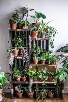 diy plant stand I am so excited to share this today- a look inside the homes of the team behind one of DCs premier plant destinations, Little Leaf , the little sister shop of Salt and S Indoor Plant Shelves, Indoor Plants, Indoor Plant Decor, Balcony Plants, Outdoor Balcony, Outdoor Curtains, Hanging Plants, Shelves With Plants, Plant Wall Decor