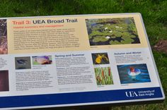 UEA Broad Trail: looking at local species on our walk