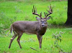 Taken at CJW Whitetail Ranch in Alto Texas