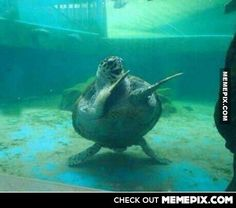 The happiest turtle ever. I may or may not have, done this at the bars before..