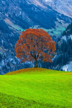 Lone tree in a mountain field Beautiful World, Beautiful Places, Beautiful Pictures, Palette Verte, Image Nature, Lone Tree, Jolie Photo, Tree Forest, Forest City