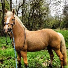 Instagram photo by marcelinamatyszczak Horses, Animals, Instagram, Animales, Animaux, Animal, Animais, Horse