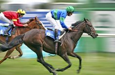 Most Successful Horse Racing Tipster