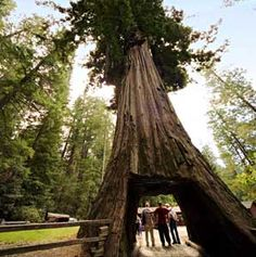 Redwood forest ca on pinterest hot springs northern for Warm weather vacations in february
