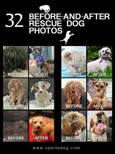 32 Before-And-After Rescue Dog Photos