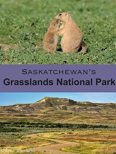 Badlands in Grasslands National Park in southern Saskatchewan park offer a wealth of photography possibilities. Travel Ideas, Travel Inspiration, Travel Tips, Canada National Parks, Canadian History, Travel Information, Canada Travel, Historical Sites, Travel With Kids