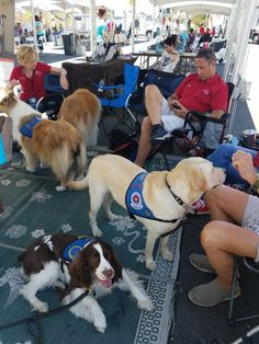 Therapy dogs at a pet adoption event .