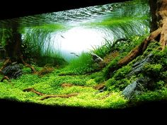 Green Aquarium HD Wallpaper on MobDecor http://www.mobdecor.com/b2b/wallpaper/219662_green_aquarium