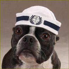 寒さに関係なく帽子をかぶる犬達のファッション【写真】  |  犬動画COOL
