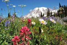 Top 10 Wildflower Hikes