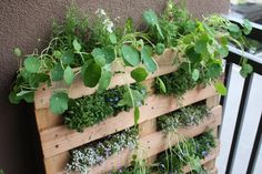 DIY Small Space Pallet Garden Pallet gardening lean up against wall with salad greens, herbs, and fl Herb Garden Pallet, Pallets Garden, Pallet Gardening, Pallet Planters, Gardening Zones, Vegetable Garden, Palette Deco, Vertical Gardens, Vertical Planter