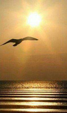 Volando