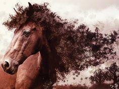 La tête d'un cheval