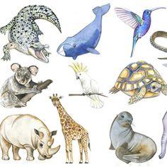 Животные для детского проекта