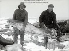Men carrying a whale fin, Ragged Island, 1927. Captain William Sylvester (left) carrying the removed pectoral fin of a finback whale on Ragged Island. The whale was discovered by lobster fishermen after a storm washed it ashore near Orr's Island in February. Item # 23626 on Maine Memory Network