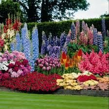Image result for annual flowers