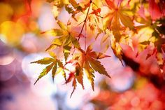 Fall Landscaping Ideas: 5 Colorful Plants for. - Chantilly, VA - Fall landscape design ideas with colorful Northern Virginia plants: AllGreen Landscape Co. Fall Pictures, Fall Photos, Thanksgiving Bible Verses, Fall Inspiration, Comment Planter, Colorful Plants, Mabon, Fall Is Here, Plantation