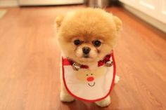 this is a tiny bear/dog