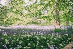 Kew Gardens | Gal Meets Glam | Bloglovin'
