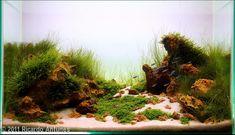 2011 AGA Aquascaping Contest - Entry #402