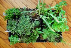 Eating Disorders with Dr Kathleen Fuller: What Are the Health Benefits of Oregano?