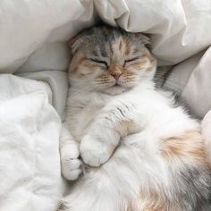 cat aesthetic Why do cats look so comfortable when - cat Cute Kittens, Cats And Kittens, Fluffy Kittens, Cats Bus, Cutest Animals On Earth, Animals And Pets, Funny Animals, Gato Gif, Photo Chat