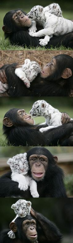 Monkey and tiger- so cute! Wish my kids got along that well.