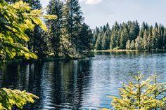 Jura & Drei-Seen-Land - 6 besondere Orte zum Natur genießen - Moorlandschaft am Etangs de la Gruère Seen, River, Outdoor, Mystical Forest, Canoe, Law School, Mountains, Landscape, Outdoors