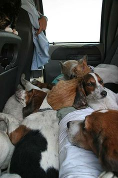 Dogs, Cats all together.....