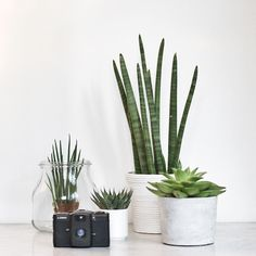 """""""Little green styling for the #urbanjunglebloggers with vases and plants from Ikea."""""""