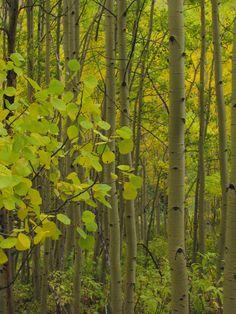 Aspen Grove, Colorado