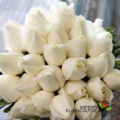 Buquê de noiva elegante montado pela equipe da Floricultura Santana. O estilo que usamos foi o rendo. As flores que deixam esse buquê lindo foram as Rosas brancas, que simbolizam paz e pureza, associadas às grandes uniões e novos começos. Faça seu buquê com a gente, montamos com o seu gosto.  Contato: (11) 2979-5157 Site :http://www.floriculturasantana.com.br/