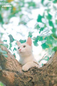 望见你从树前经过~~ - 喵呜不停 - 图虫摄影网