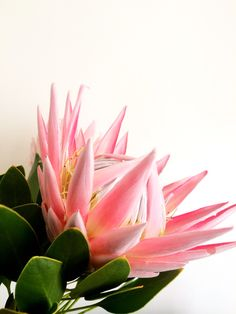 My photo of my fav King Protea