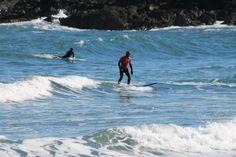 Surfers at Coldingham Sands